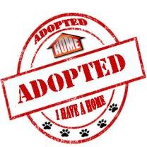 Adopted, Dog SDDAC, Animal Control Carlsbad