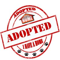 Adopted, Dog SDDAC, Animal Control Carlsbad