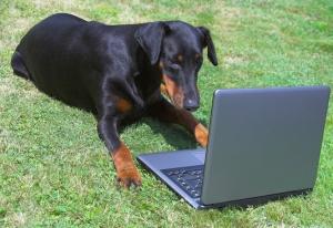 writing a blog, animal reporter