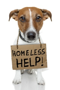 Adopt, rescue, dogs, cats, bunnies, humane society, escondido